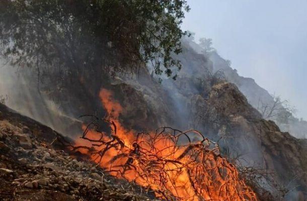 """آتش سوزی جنگل های """"دیل"""" گچساران همچنان ادامه دارد"""
