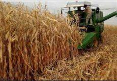 جزئیات کشت پاییزه امسال خوزستان با بالاترین سطح کشت در کشور