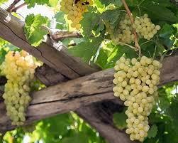 سرانه تولید میوه در کشور بالاتر از متوسط جهانی است