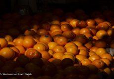 قیمت پرتقال و سیب زرد شب عید از محل ذخایر دولت برای تنظیم بازار اعلام شد.