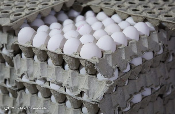 قیمت تخم مرغ دوباره پر کشید؟